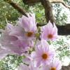 Not me but tree dahlias